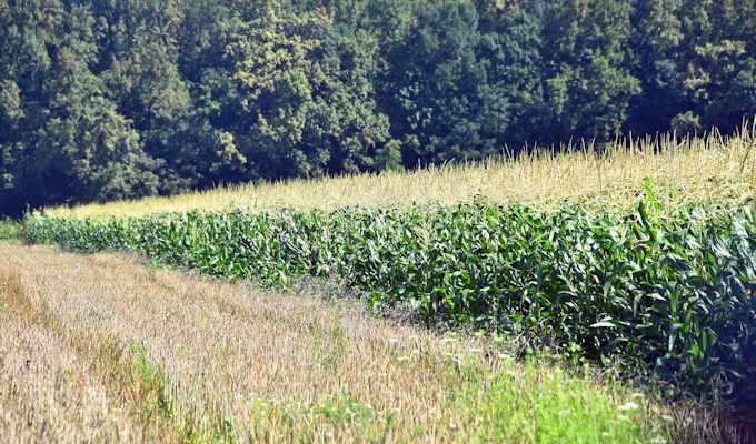 Natječaj za Obnovu poljoprivrednog potencijala